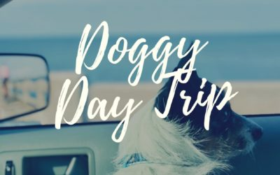 Top 3 hangout spots for your furry friends on Anna Maria Island?